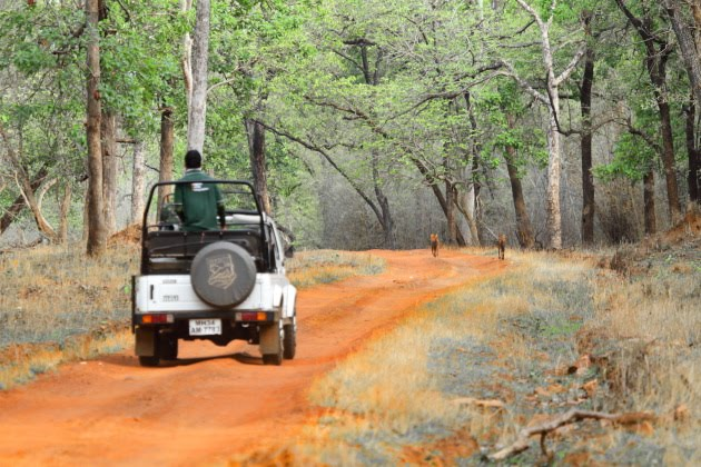 A Tadoba Tiger Reserve Wildlife Jeep Safari Experience