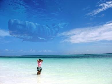 Download Aplikasi Edit Foto Ikan Paus Hiu Terbang di Langit dan Tutorial Cara Edit Foto Up and Up Ikan Terbang di Langit dengan Android Kekinian Gratis Mudah
