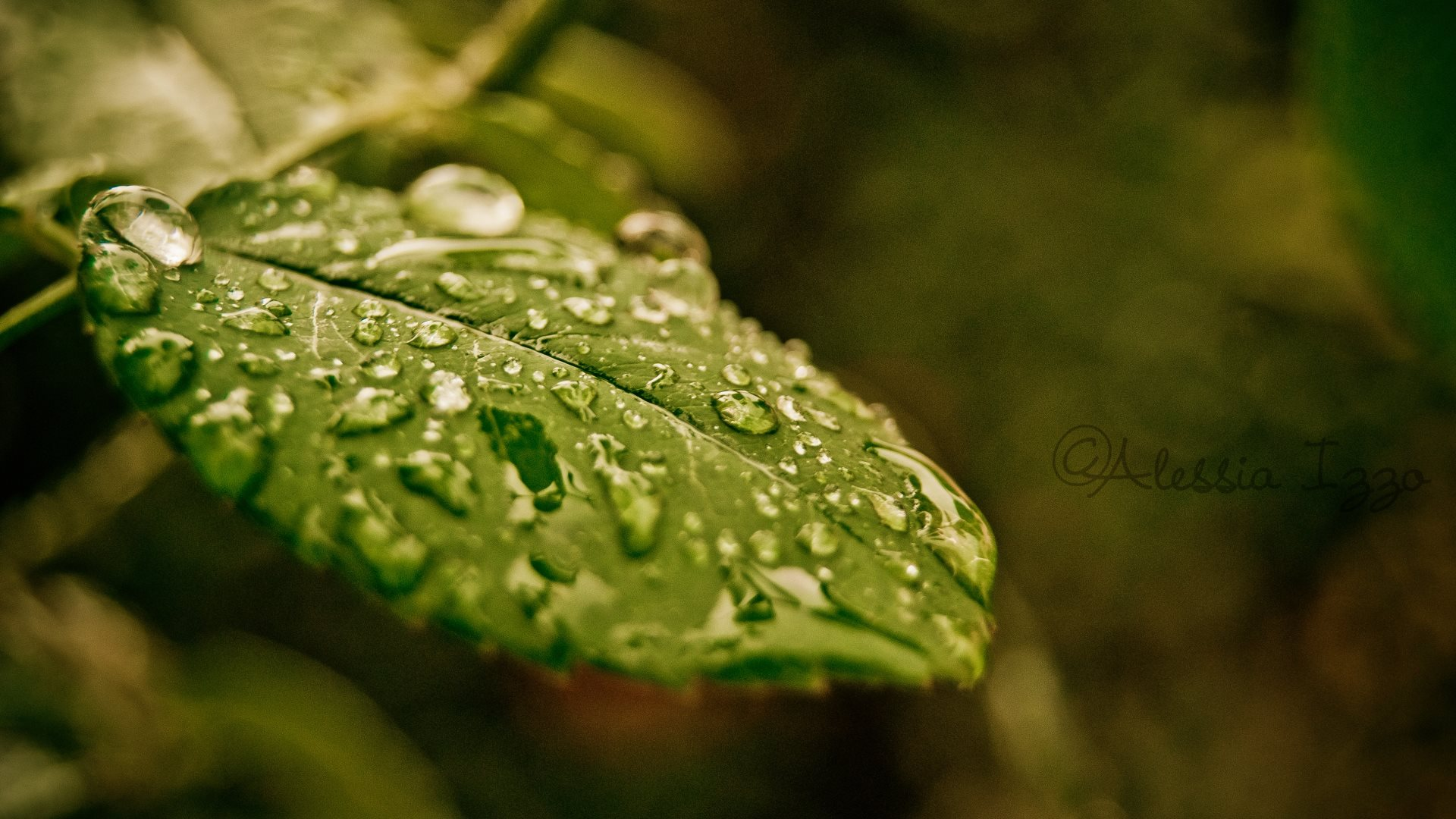 droplets on leaves 4k - photo #3