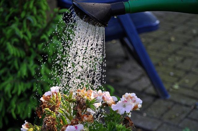 regando una planta en el hogar