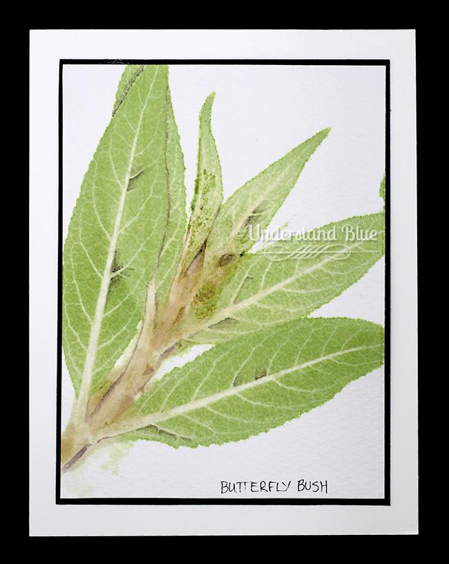 Chlorophyll printing by understandblue