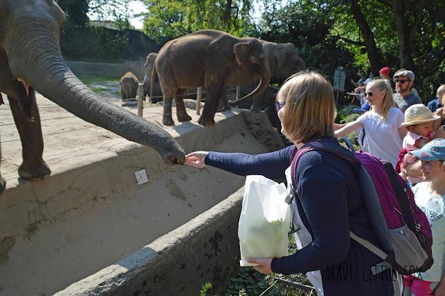 Elefanten Tierpark Hagenbeck Hamburg