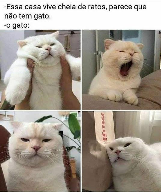 Memes engraçados