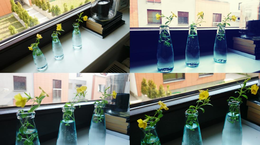 Kwiatuszki w buteleczkach Osiedle Bursztynowe wrocław