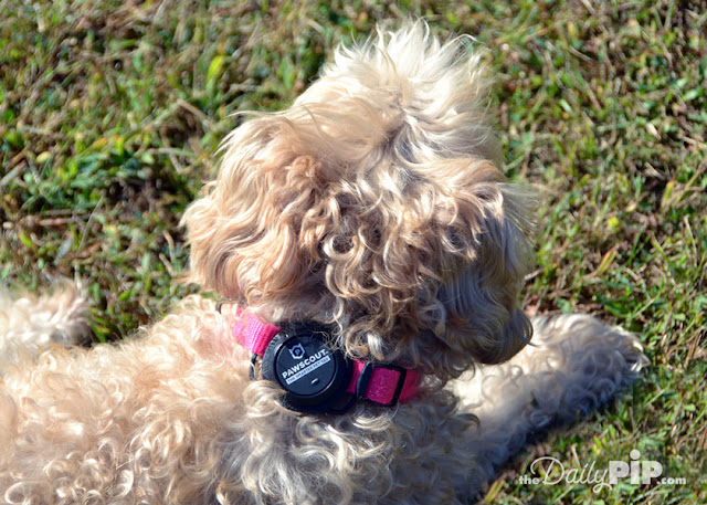 Pawscout The Smarter Pet Tag can be attached to a collar or worn as a tag