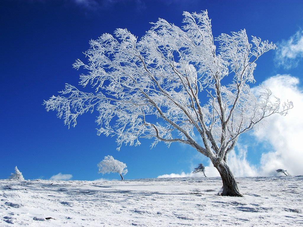Wallpaper For Desktop Background: Nature Winter Wallpapers