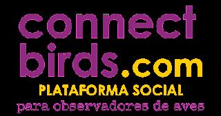 ConnectBirds