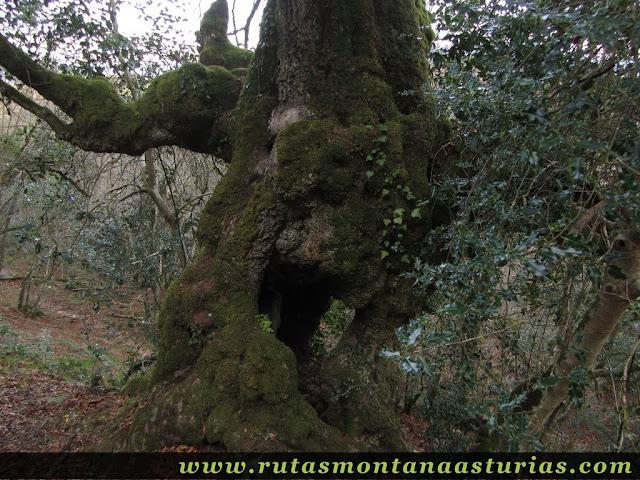 Tronco en el bosque