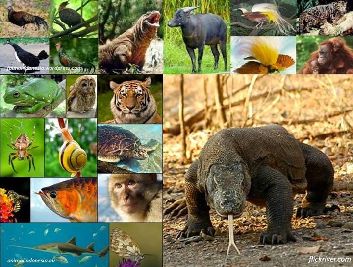 850+ Gambar Hewan Laut Hayati Dan Non Hayati Gratis Terbaik