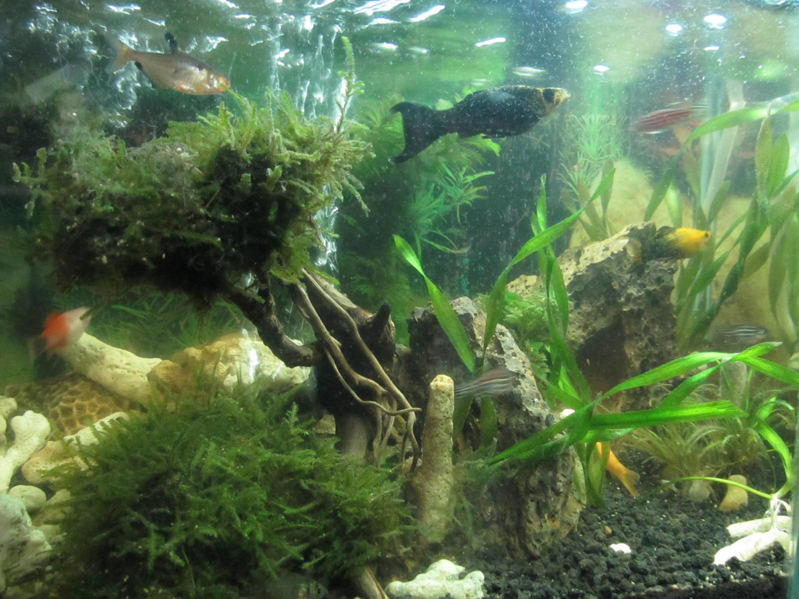 Bandung paris van java with love ikhwan creative aquascape jilid 1 - Gambar aquascape ...
