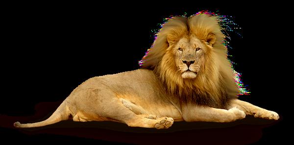 Lion Png Images Download: Lylou.Anne Collection: Ma Table Un Safari En Afrique