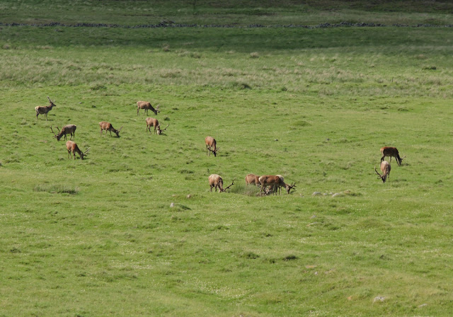Deer on Balmoral Estate Scotland