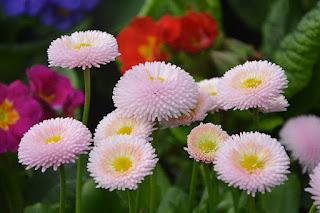 Realizarán en Edomex 4ta Feria de las Flores.