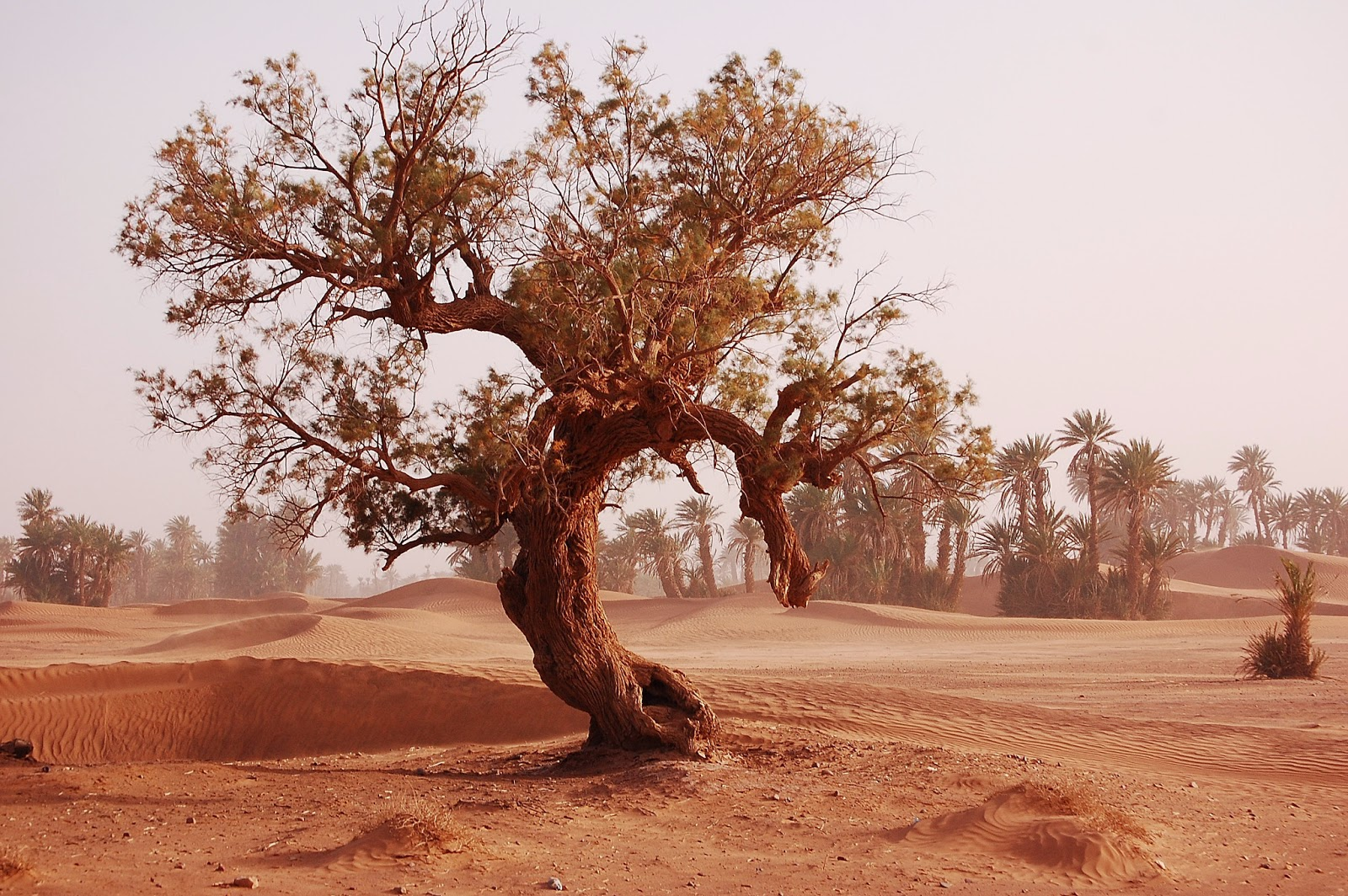Travels to Nowhere Wide Awake in the Sahara a