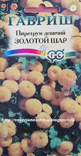 пиретрум или матрикария, хризантема девичья