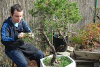 curso bonsai bonsai bilbao bizkaia