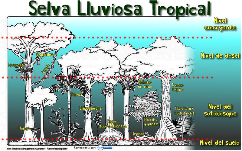 niveles, selva, lluviosa