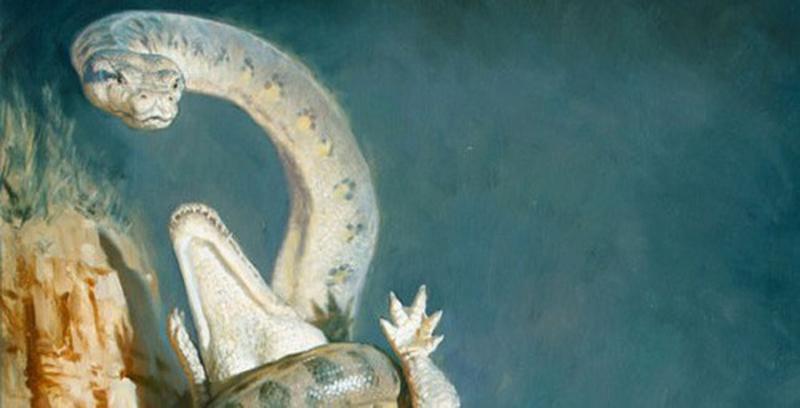 Uy lực của loài rắn lớn nhất lịch sử trái đất