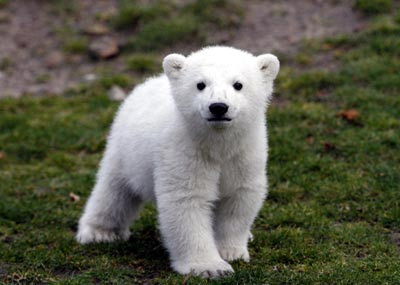 cute-bear-images-2.jpg