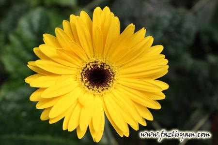 Suria3 Bunga Bunga Cinta Kekwa