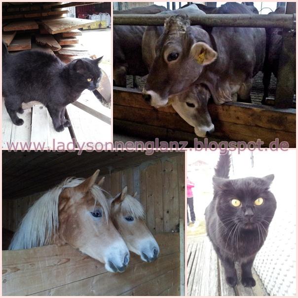 Ausgangssperre Tiere Versorgen