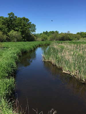 Sunrise River, some of Minnesota's floodplains and wetlands