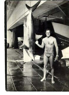 Caça Submarina - recorde brasileiro caça submarina - cação corta-garoupa 78 kg