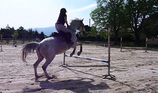 CSO obstacle équitation Lutin
