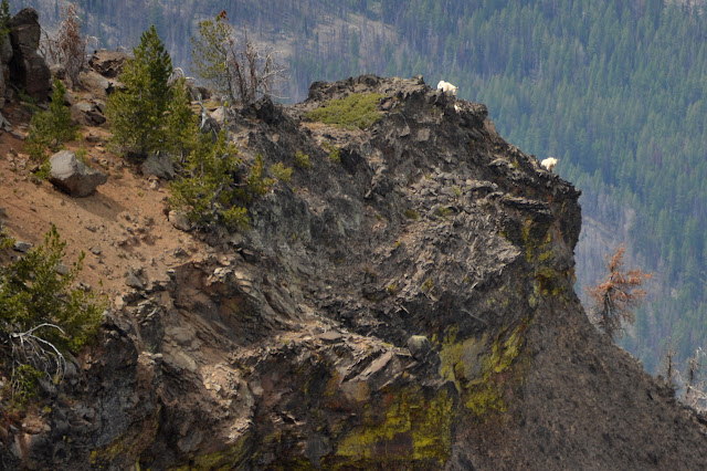 two mountain goats on the edge
