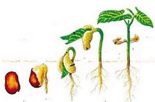 Pengertian, Definisi dan Ciri-Ciri Pertumbuhan dan Perkembangan Makhluk Hidup