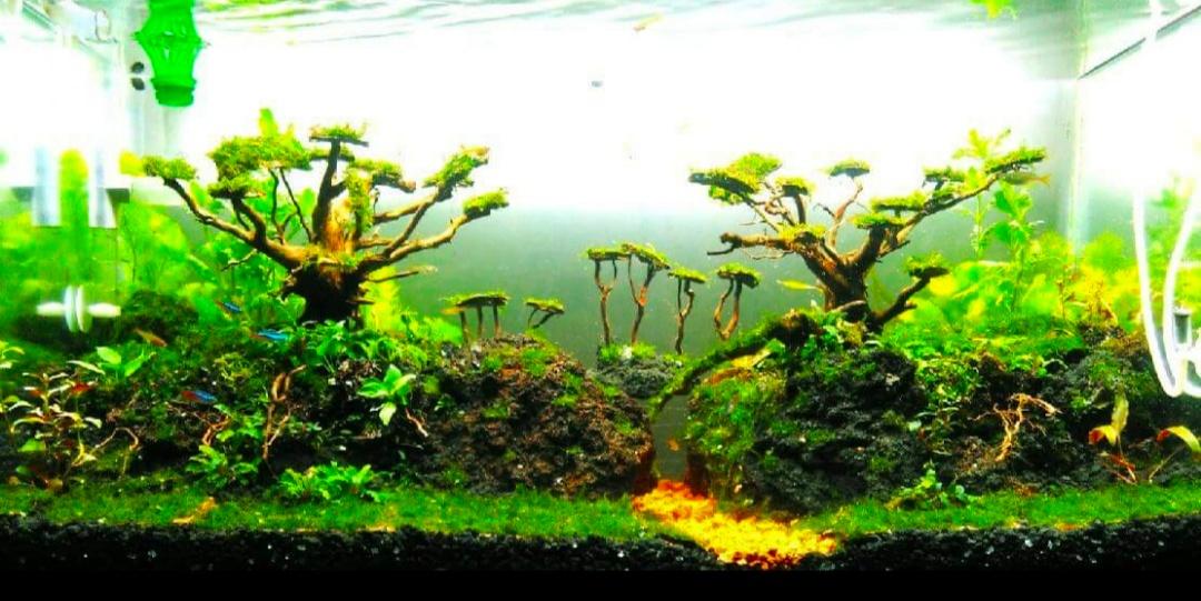 10 Model Tema Aquascape Terbaik Disertai Contoh Gambarnya ...