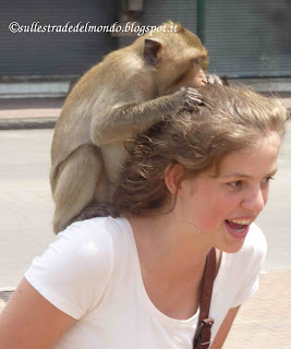 Scimmie Lobpuri