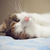 Mitos Menabrak Kucing Berpengaruh Pada Kehamilan Istri, Bagaimana Menurut Pandangan Islam?
