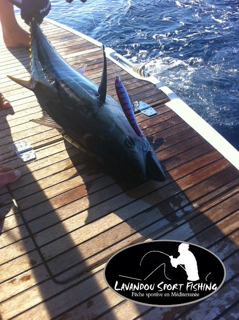 pêche du thon