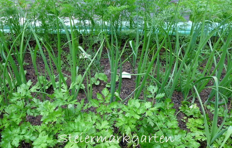 Gemüse-Mischkultur-im-Hochbeet-Steiermarkgarten