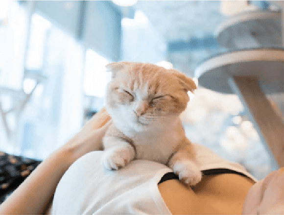 Photobook japonês mistura peitos com gatinhos