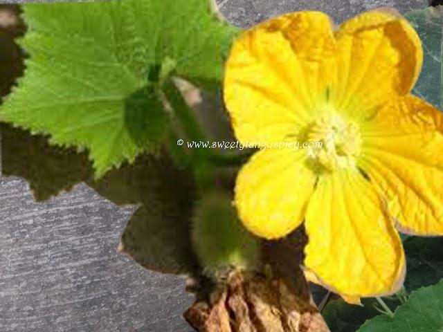 Health benefit of vegetables #1  Ash gourd