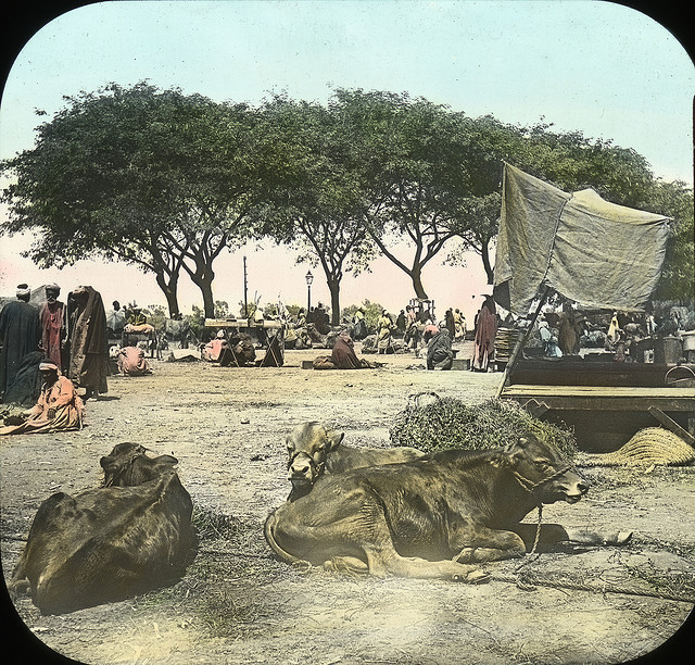 Egypt - Market at Kasr-en-Nil. Brooklyn Museum Archives.