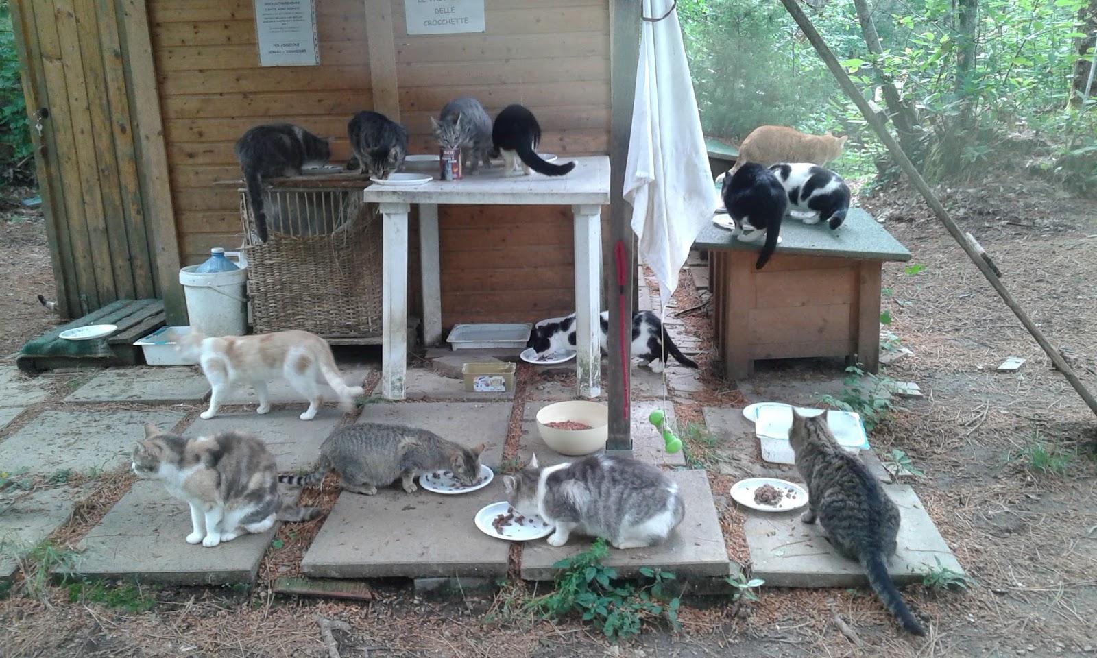 I gatti di Monte Malbe ARRIVI  PARTENZE