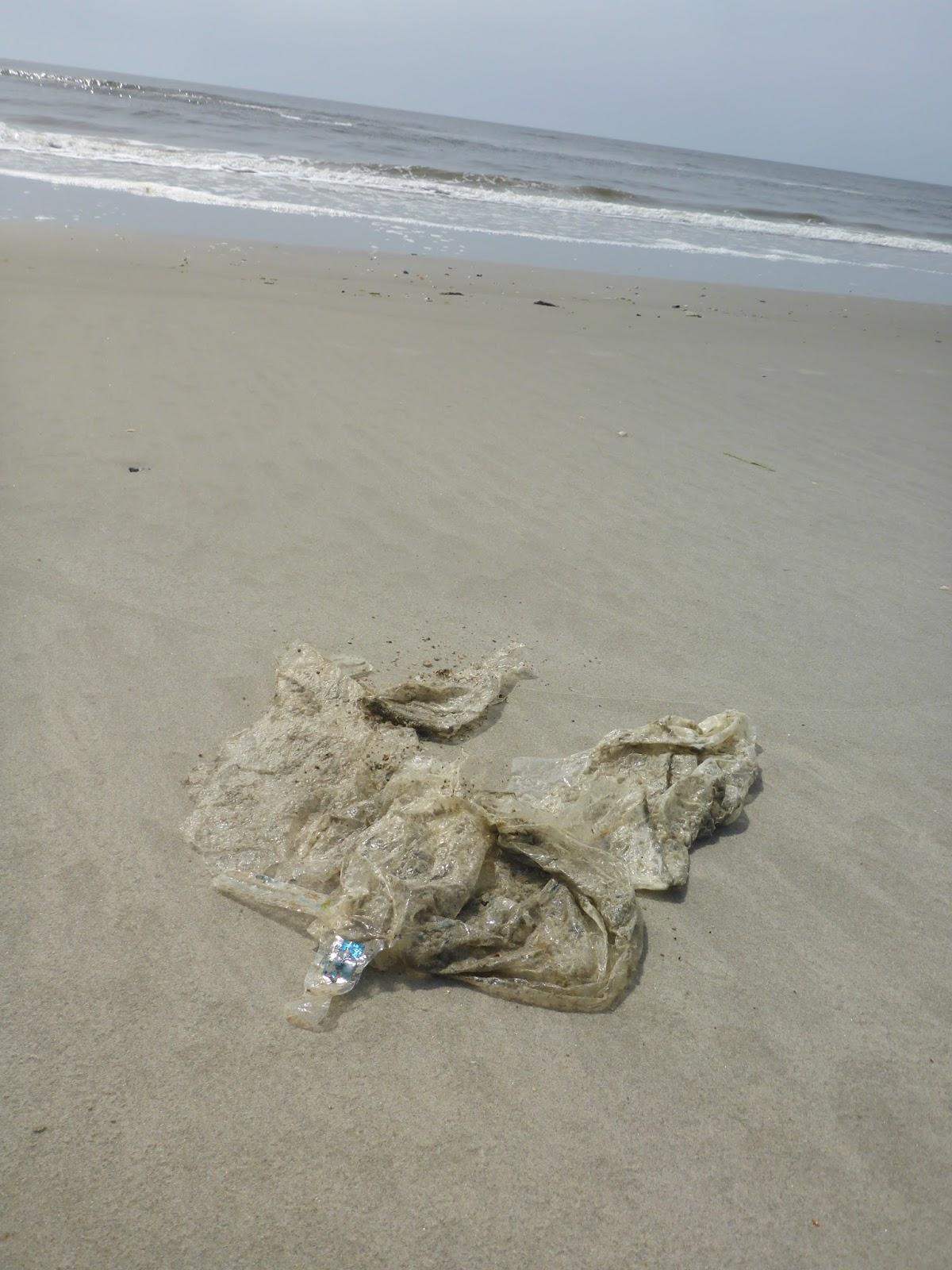 Jelly Fish North Carolina Beaches