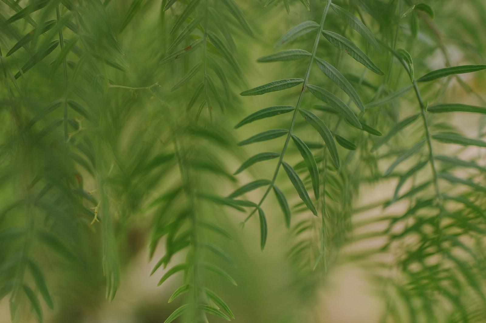 Снимок сделан на объектив Nikon AF-S Nikkor 28mm f/1.4E ED
