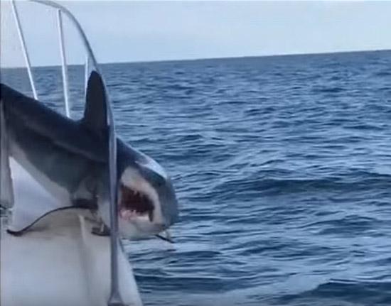 Tubarão pula dentro de barco - Img 2