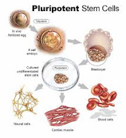 TEXTBOOK : PLURIPOTENT STEM CELLS