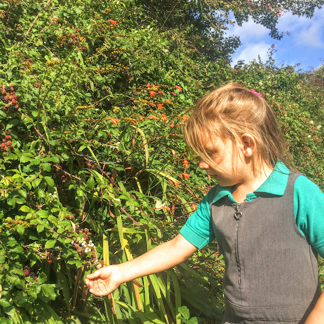 Girl blackberry picking