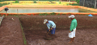 cara budidaya ikan gurame di kolam terpal dan beton,cara budidaya ikan gurame pdf,pembesaran  ikan gurame di kolam tanah,pembesaran  ikan gurame di kolam terpal,
