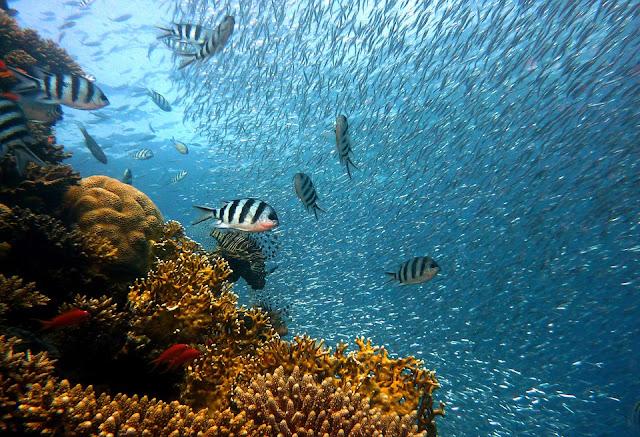 Gąbka z dna morza, czy warto używać naturalnych gąbek