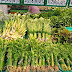 Các siêu thị Việt Nam nhập cuộc 'cơn lốc' gói thực phẩm bằng lá chuối