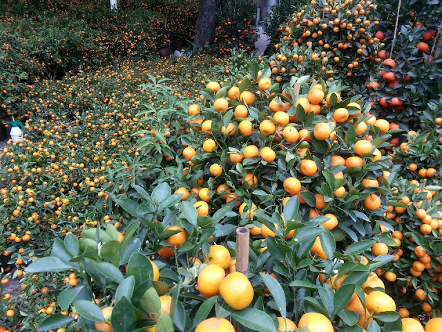 Mandarinas para año nuevo