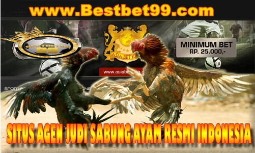 sabung ayam live indonesia