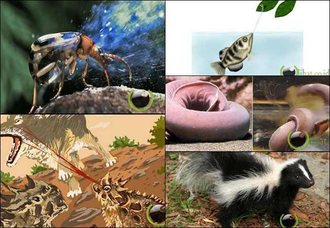 10 Binatang dengan Pertahanan Diri yang Aneh dan Unik
